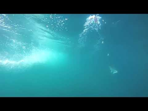Underwater Downrigger Cam Camera Footage - See Salmon Stike At  Lure (meat Rig), 2013