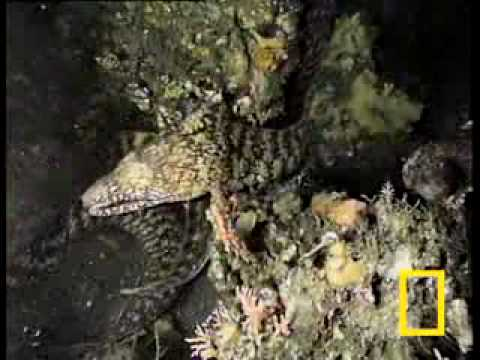 VnExpress - Những động vật lạ dưới biển - Nhung dong vat la duoi bien.flv