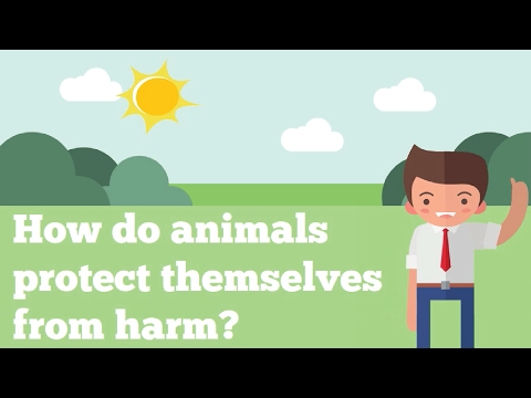 How Do Animals Protect Themselves From Harm