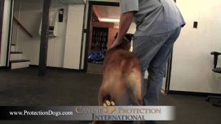 Fighting Within Protection Dog Training By Cpi.mov