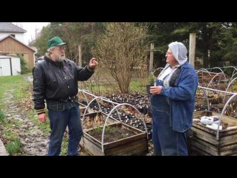 Propagating Dwarf Alberta Spruce from Cuttings
