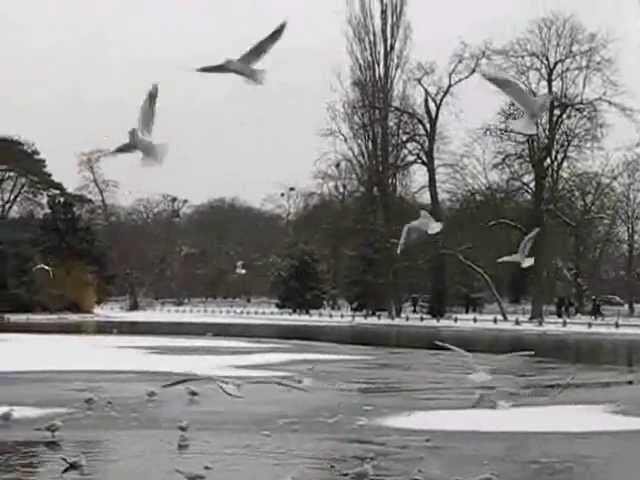 Gaviotas en Paris con nieve, Gulls in Paris with snow Videos De Viajes