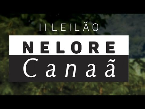 Lote 14 (Elisee FIV AL Canaã - NFHC 356)
