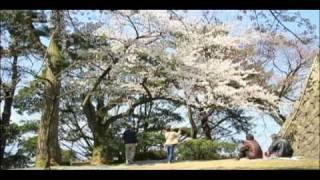 桜 丸岡城(霞ヶ城) 福井県