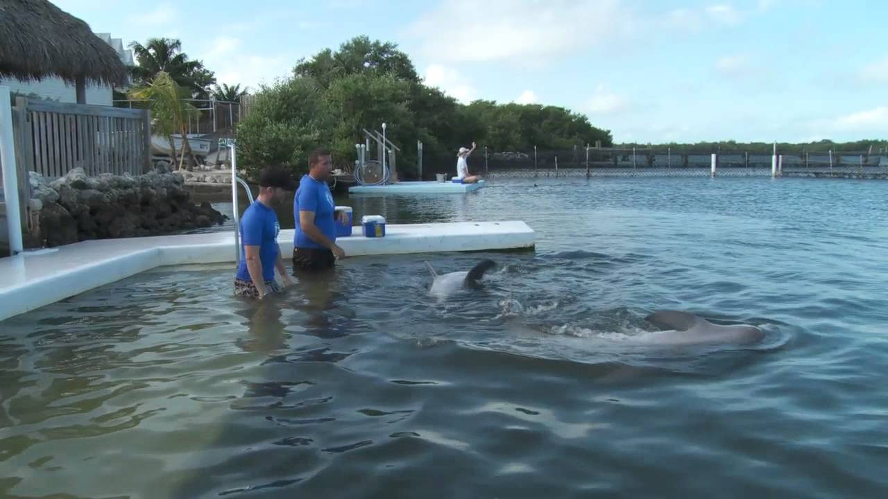 The Dolphin Research Center -- swim with dolphins in the Florida Keys