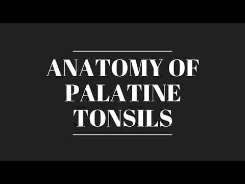 Anatomy of Palatine Tonsil || Tonsilar Bed || Blood and Nerve supply ...