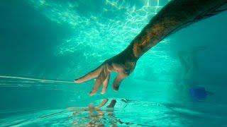 GoPro Awards: 3 Years in 3 Minutes (Music Video) - People the Kangaroo