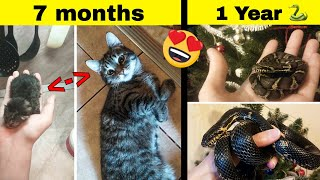 Adorable Photos Proving That Our Pets Grow Up Way Too Fast