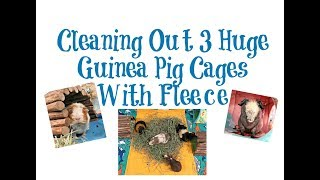 Cage Cleaning: 3 Huge Guinea Pig Cages With Fleece