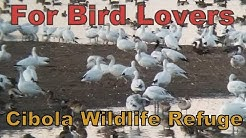 Van Life; Cibola Wildlife Refuge Auto Bird Tour & Headquarters Free Camping