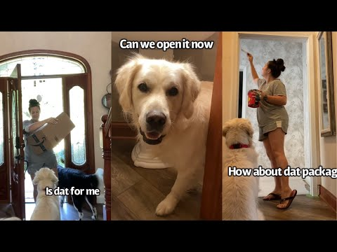 Dog Gets A Package