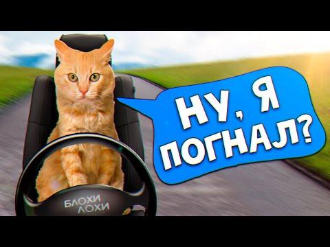 Спасение рыжего котенка. Котенок уезжает домой? / SANI vlog