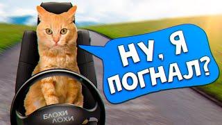 Спасение рыжего котенка. Котенок уезжает домой SAN  Vlog