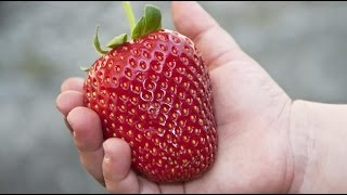 Прикорм ребенка ягодой