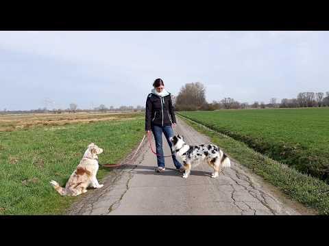 Hundetraining: 3 praktische Übungen für unterwegs | 3 Übungen, die uns den Alltag leichter machen