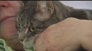 New health problems for 'ceiling cat'