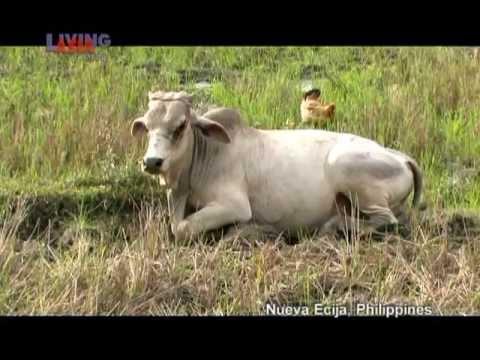 GREEN NUEVA ECIJA | Living Asia Channel