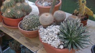 My Cacti & Succulent plants end of September Update 2016