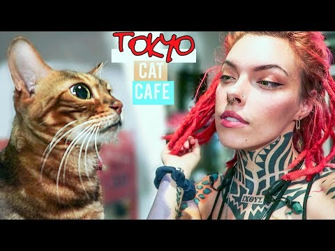 I Went To A CAT CAFE In Japan *the Cats HATED ME*