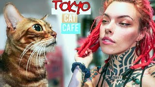I Went To A Cat Cafe In Japan The Cats Hated Me