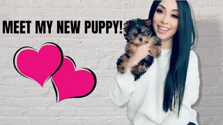 Meet My Yorkie! | Storytime | The First Week With My New Puppy
