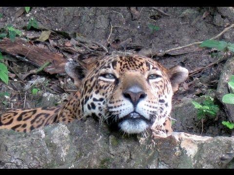 Petencito Zoo, Flores, Lago Peten Itza, Guatemala, Central America, North America