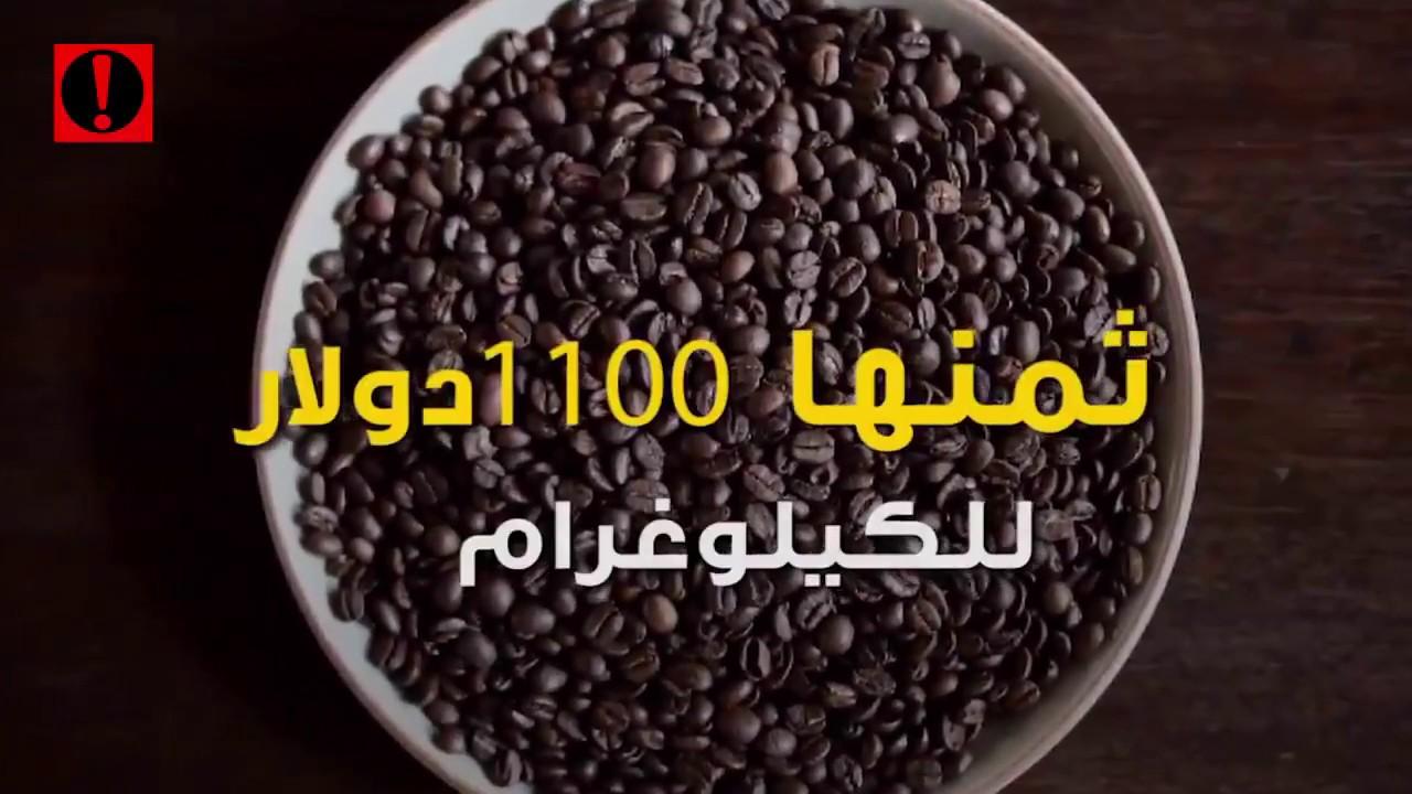 أغلى قهوة في العالم من روث حيوان آسيوي منوعات