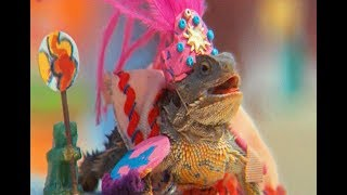 Ariel Pink - Dinosaur Carebears (Music Video)