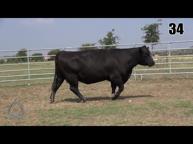 Pearcy Angus Ranch Lot 34