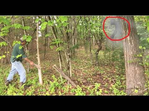 MAJOR RESPONSES From The Bigfoot Sasquatch Forest After Loud Piercing Tree Knock And Rare Sightings!