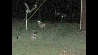 Black Panther Sightings, Alabama Bigfoot Society Adventures
