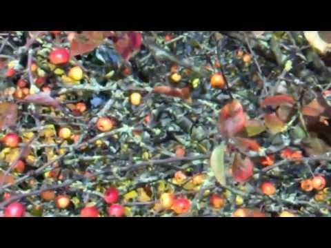 Gillingham, Dorset, 5/12/13 Music - The Orange County, Ray Flowers