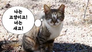 고양이식당 그 이후(풍경이있는 고양이들 마을)