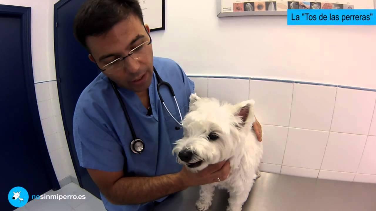 remedios para la tos en perros mayores