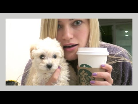 Life with a puppy | iJustine