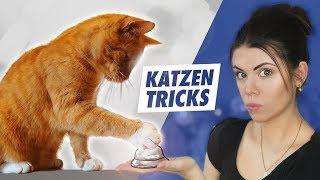 Tricks für Katzen: Kann ich meinen Kater trainieren eine Glocke zu nutzen?   Sara Casy