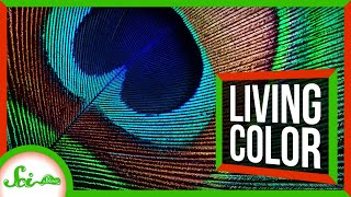 The Bizarre World of Living Color | Compilation