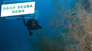 Daily Scuba News - Mayor of Cambridge dies scuba diving