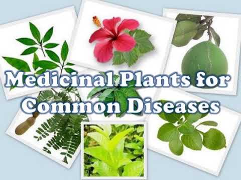 Introduction and Importance of Medicinal Plants and Herbs - Recognize  herbal plant