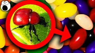 Top 10 Grossest Ways Your Food Is Made