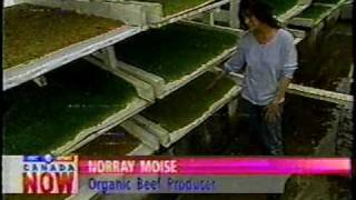 Barley sprout superfood for livestock