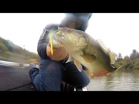 Spring Fishing In The Rain