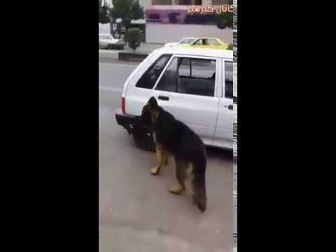 كلب ذكي Smart dog