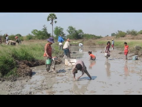 Khmer People Catching Fish at Prey Veng Province