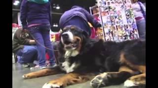 All American Pet Expo Vendor Video