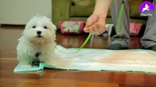 Indoor Puppy Potty Training