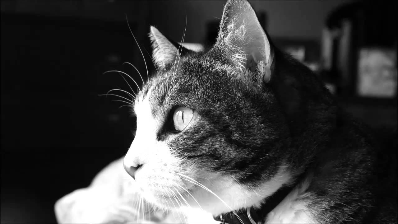 youtube cat music