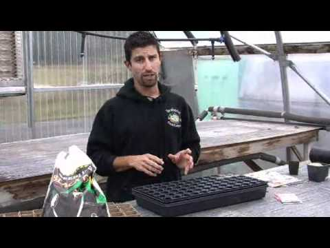 Seed starting instructional video from Territorial Seed Company