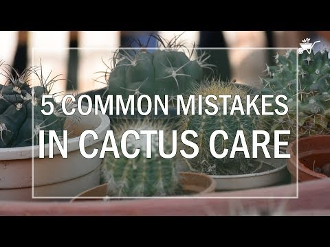 5 Common Mistakes in Cactus Care!