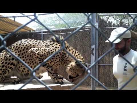 A zookeeper in Al Ain